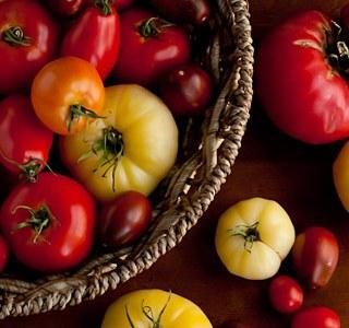 Andrea Meyers - Tomato harvest