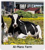 Andrea Meyers - The Farm Project: Al-Mara Farm, Midland, Virginia
