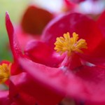<b>flowers, raindrops and macro photography</b>