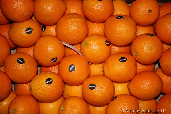 SEEING ORANGE_Fruit ready to be shaped into Christingles.