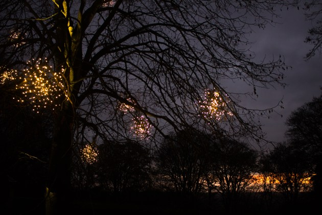 Illuminations hang on the branches of a tree, whilst in the background the sun sets.