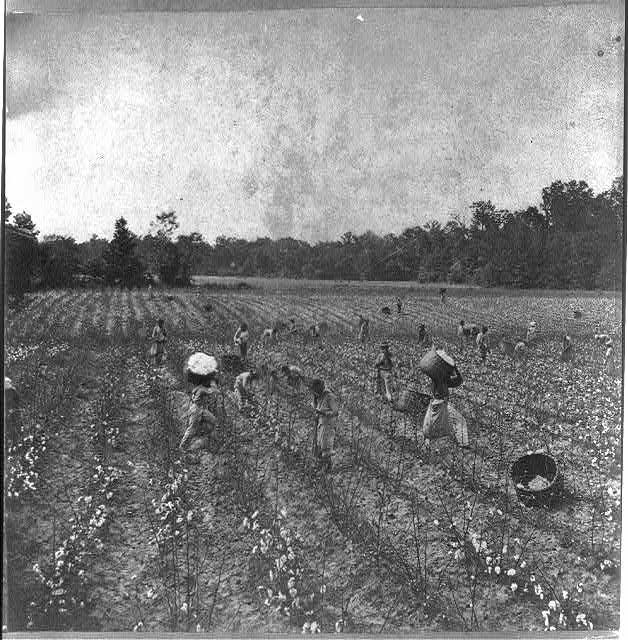 cotton_slavery