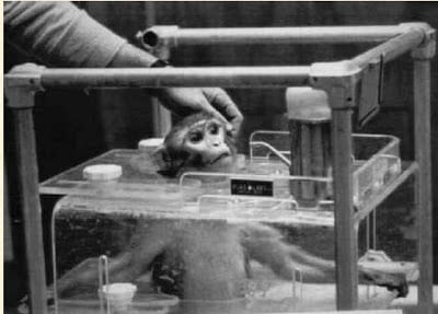 Measurement error in monkey studies