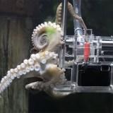 Sony PR-Stunt: Octopus nimmt unter Wasser Fotos von Besuchern auf