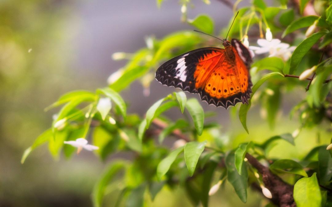 Butterfly garden…in an airport?