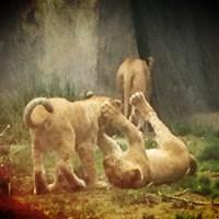 Baby Animal Boom (Woodland Park Zoo, Seattle, WA)