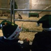 Two easy reindeer crafts