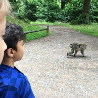 The World of Wedgwood, Free Roaming Monkeys and a lovely pottery town near London (Stoke-on-Trent)