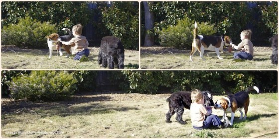 outdoor play in nature for children playing with dogs free unstructured play This week… 1/52