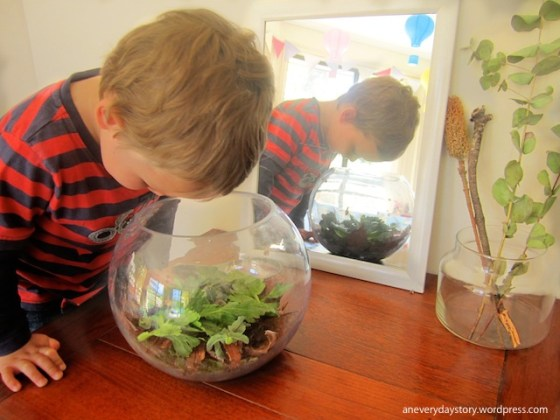 reggio inspired hands on science activities for preschoolers observation table an everyday story Observing Snails