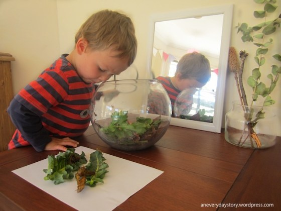 reggio inspired science activities for preschoolers observing snails an everyday story Observing Snails