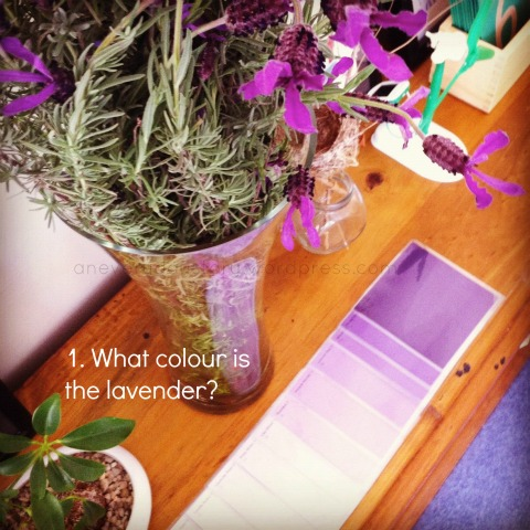 reggio activities using colour swatches an everyday story This Week…7/52