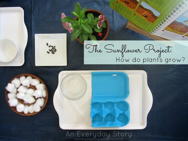 The Sunflower Project: How Do Plants Grow?