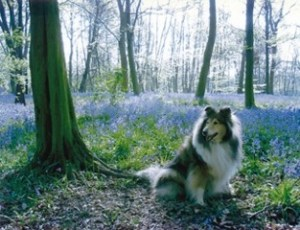 Darcey, Wanstead Park bluebells