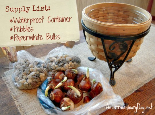 DIY Tutorial for growing paperwhites