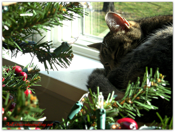 AnExtraordinaryDay.net - a place of joy and inspiration | It's Beginning to Look Like Christmas.  Or Not.  - Kitty napping by the Christmas tree