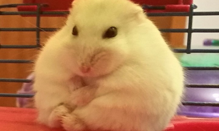 My hamster is plotting something…