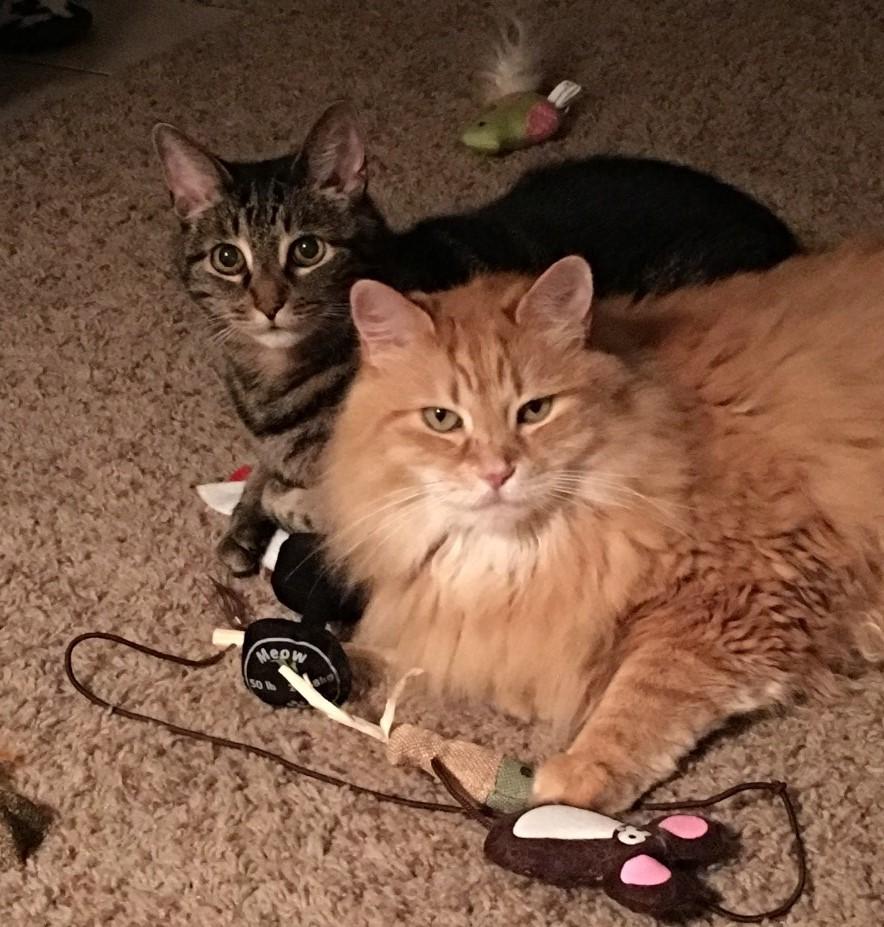 Milo&Jake