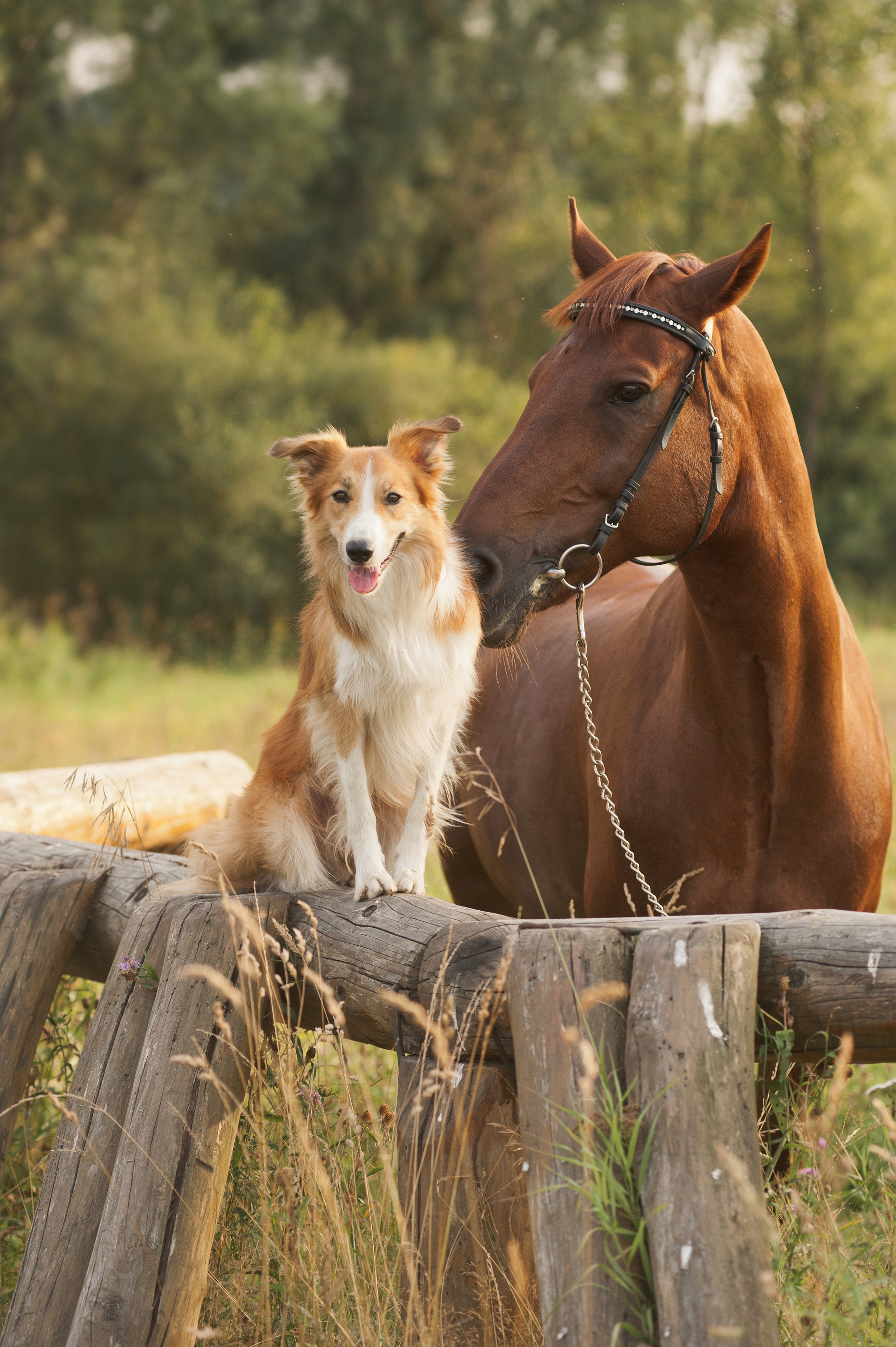 Baby Girl Nursery Wallpaper Borders Horses And Dogs Together Free Wallpaper