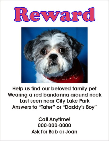 missing dog flyers - Onwebioinnovate