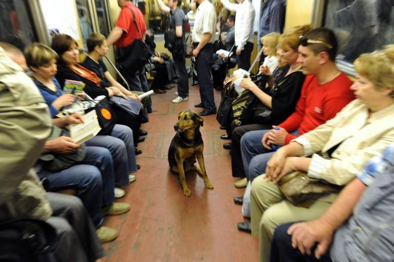 В Мадриді дозволили з собакою їздити у метро