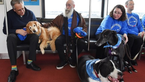 DULLES, VA - DECEMBER 21: that was part of United Paws, an United Airlines program that allows passengers to interact with comfort dogs at Washington Dulles International Airport on Monday December 21, 2015 in Dulles, VA. (Photo by Matt McClain/ The Washington Post)