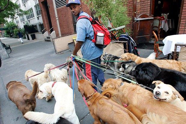 Іноземний досвід облаштування майданчиків для собак