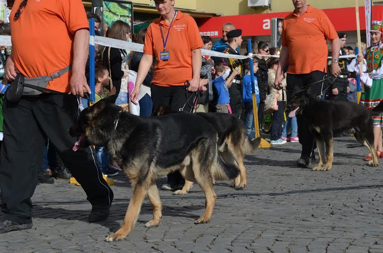 Вперше в Україні стартував чемпіонат світу зі слідової роботи з собаками службових порід