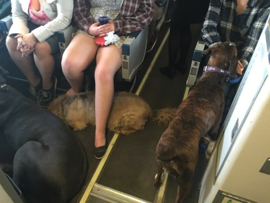 pets-onboard-canadian-north-flight-1515-from-fort-mcmurray-to-edmonton-may-2016