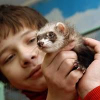 Чому люди заводять домашніх тварин?