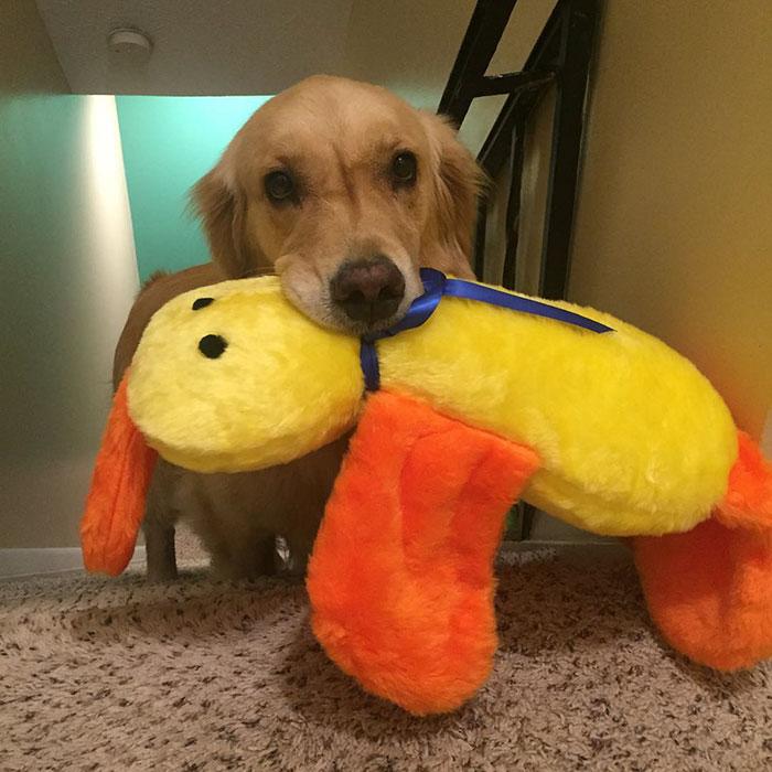 Собака, що обожнює іграшки