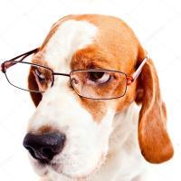 Як заняття з собакою впливають на якість її старості.