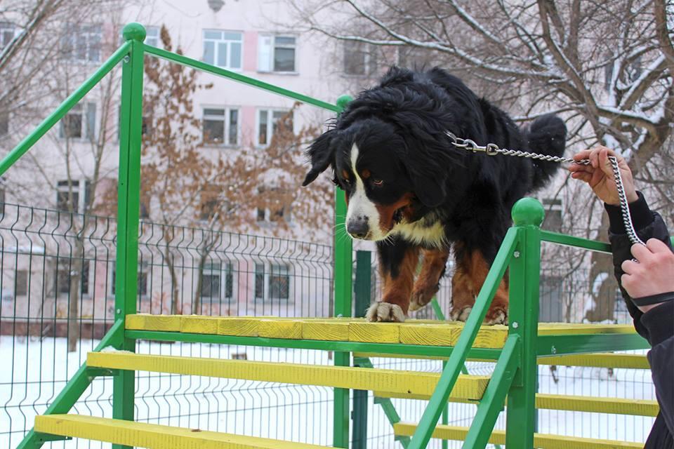 Відкриття майданчику для собак в Солом'янському р-ні