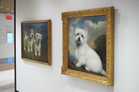 У Нью-Йорку відкриють музей, повністю присвячений собакам