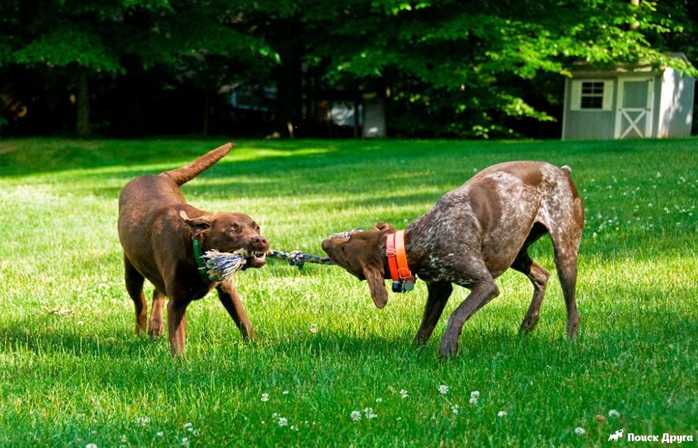 Огляд видів ігор та кращих іграшок для собак.
