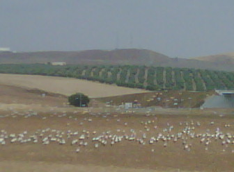 Storks as far as the eye can see