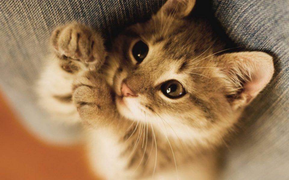 cute-baby-cat