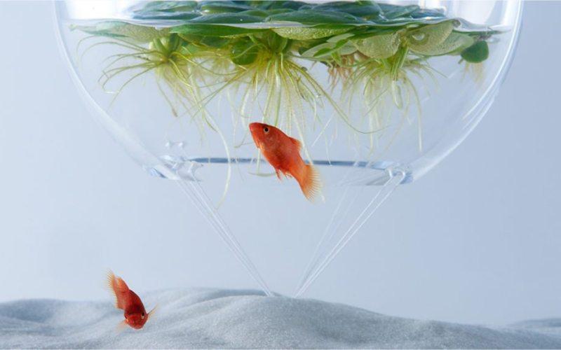 waterscape-goldfish