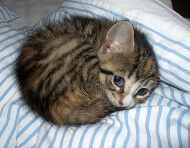 10-kittens-that-will-make-you-cry