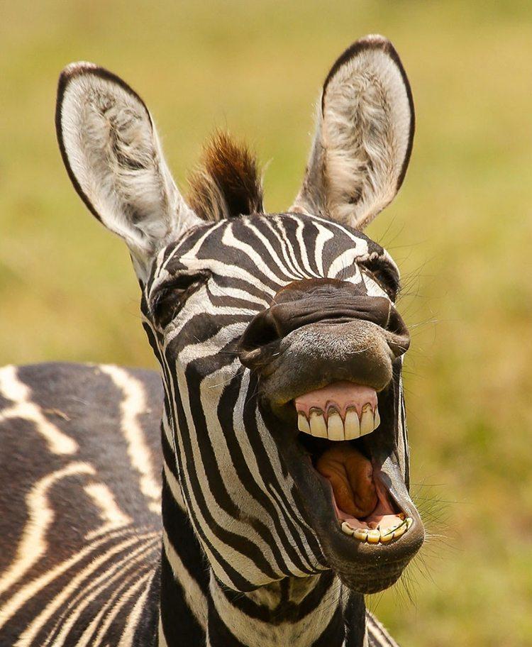1-awesome-pics-from-the-2016-comedy-wildlife-photogrpahy-awards