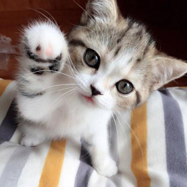 18-kittens-that-will-make-you-cry