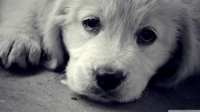 Exotic Animal Wallpaper 50 Fondos De Pantalla Con Mascotas Para Whatsapp Del 29 De