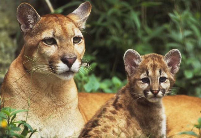 Cheetah Wallpaper Hd Hermosas Im 225 Genes Para Descargar Gratis De Animales De La