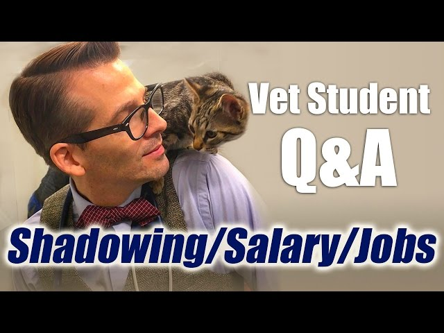 Vet Student QA - Different Jobs, Career Salary, And Shadowing A - shadowing jobs