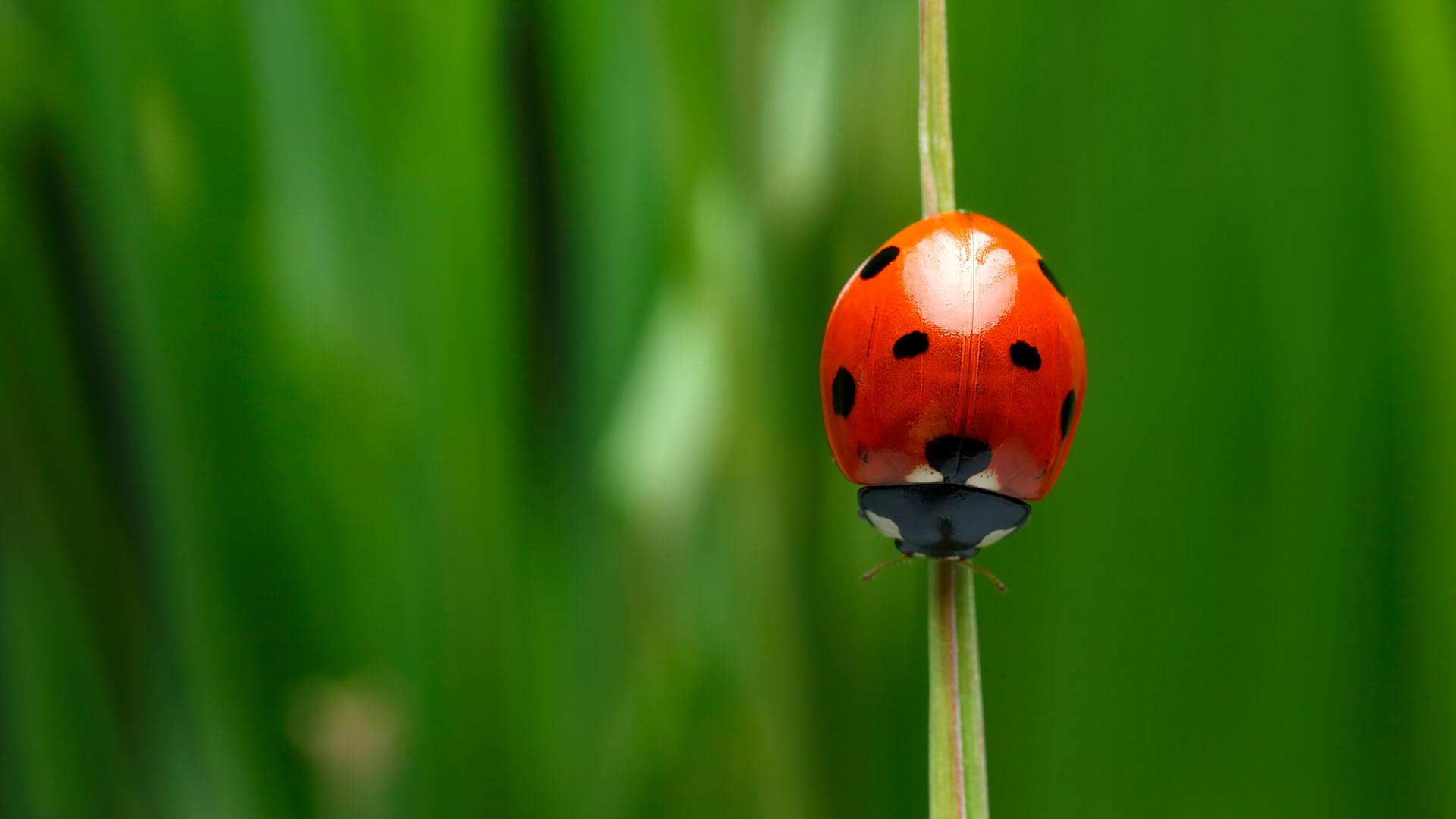 Cute Animal Iphone Wallpaper Ladybug San Diego Zoo Animals Amp Plants