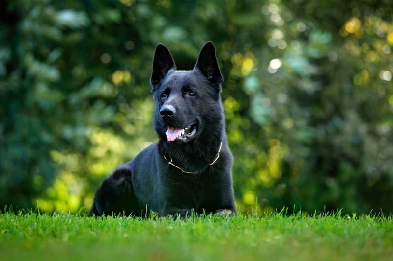 Large Of Dog Breeds That Start With B