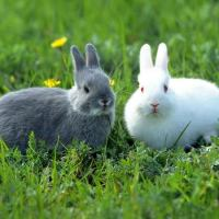 Rabbit Facts For Kids | Amazing Facts about Rabbits For Kids