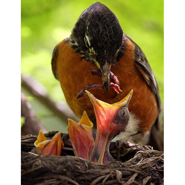 What To Feed A Baby Bird That Fell Out Of A Nest