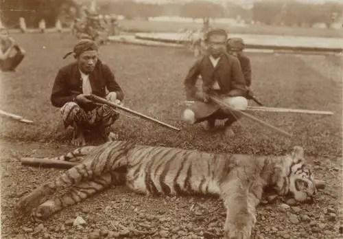 Javan-Tiger-This-photograph-of-a-live-Javan-tiger-Panthera-tigris-sondaica-was-taken-in-1938-at-Ujung-Kulon-1 Bali Tiger