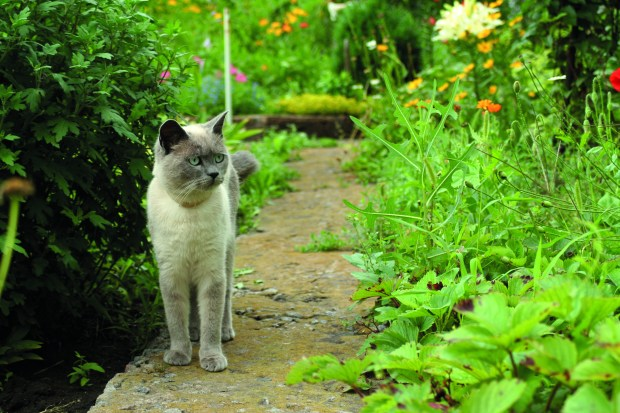 Help your pet to enjoy your garden by keeping it safe for them  Keeping your pet safe in the garden shutterstock 299151320